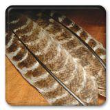 Ozark Oak Mottled Turkey Quills