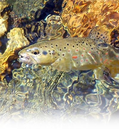 Fly Fishing Schools, Fly fishing clinics