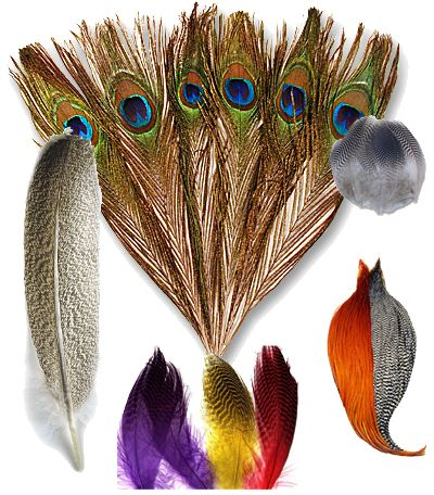 <center>Fly Tying Feathers</center>