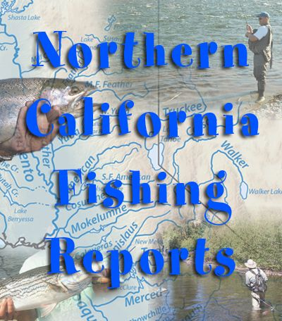 Fishing Reports. Updated weekly